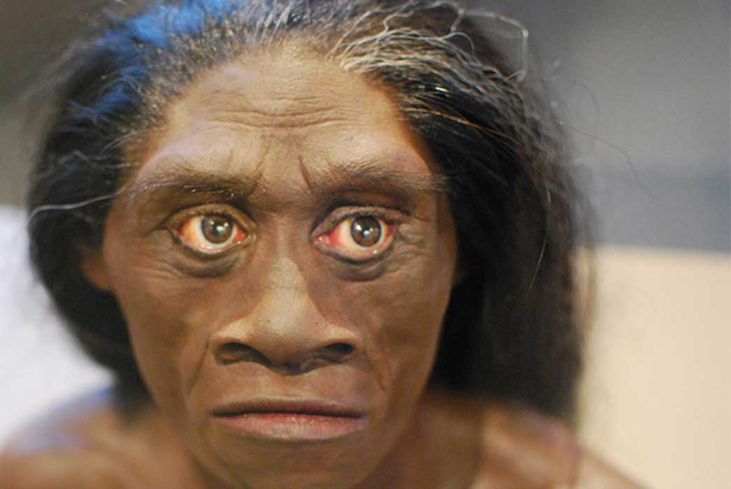 Model of Homo Floresiensis