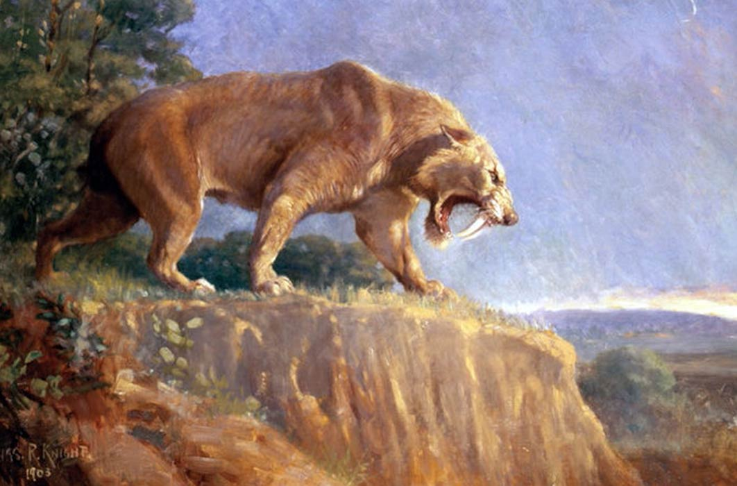 Painting of Smilodon populator from the American Museum of Natural History by Charles Knight (1903) (Public Domain)