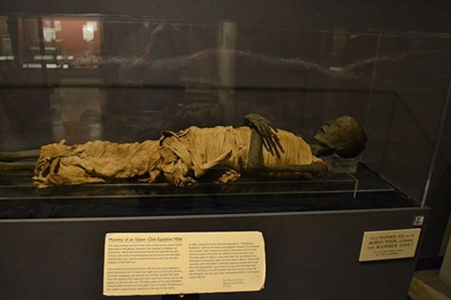 Mummy of an upper-class Egyptian male (Rosicrucian Egyptian Museum) (Oleg Alexandrov / CC BY-SA 4.0)