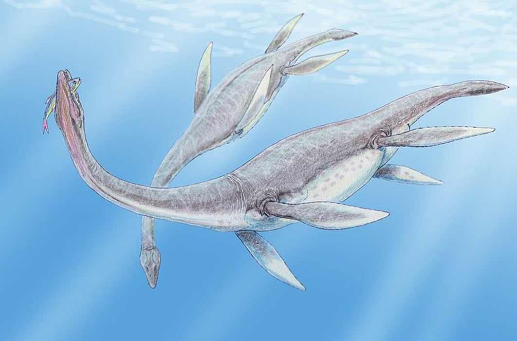 Plesiosaurus dolichodeirus (:Dmitry Bogdanov/ CC BY-SA 3.0)