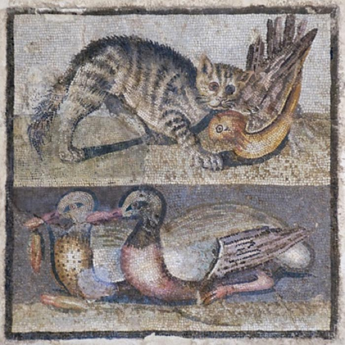 Palazzo Massimo alle Terme. Central panel of a floor mosaic with a pet cat and two ducks. First century BC. From the triclinium of a suburban villa in the Cecchignola area. (Public Domain)