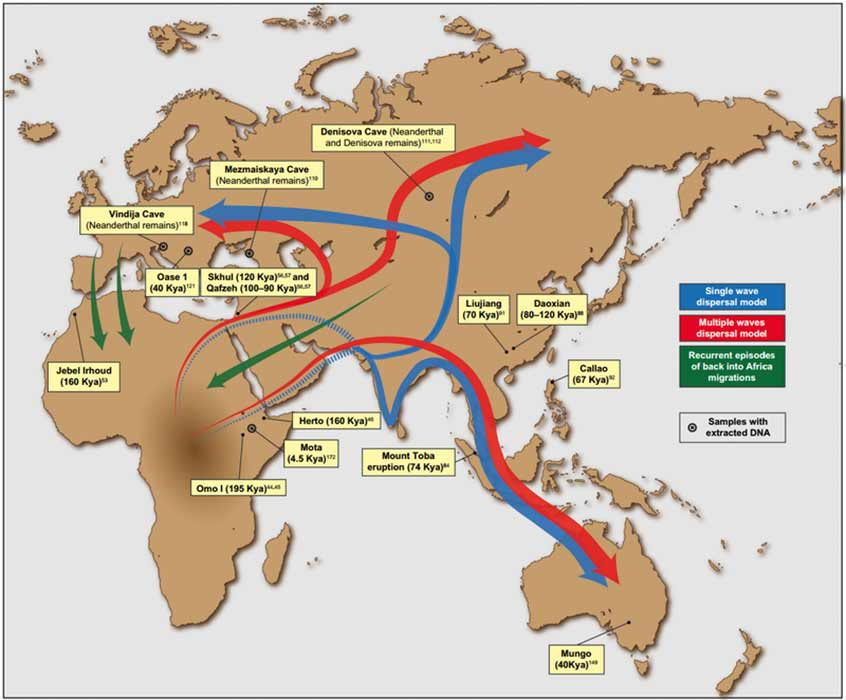Putative migration waves out of Africa and back migrations into the continent, as well as the locations of major ancient human remains and archeological sites (López et al.2015)(CC BY-SA 3.0)