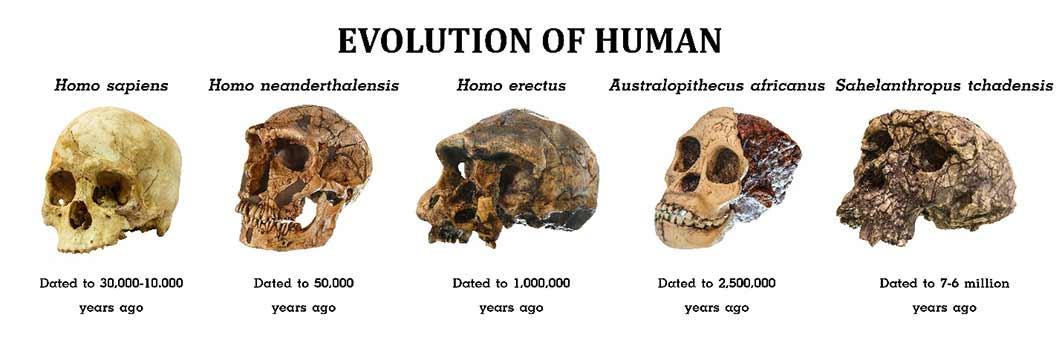 Evolution of Mankind (stockdevil / Adobe Stock)