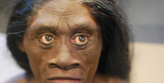Model of Homo Floresiensis