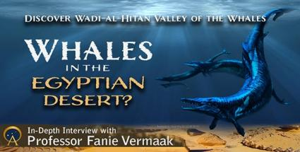 Whales in the Egyptian Desert?  Discover Wadi-al-Hitan - Valley of the Whales